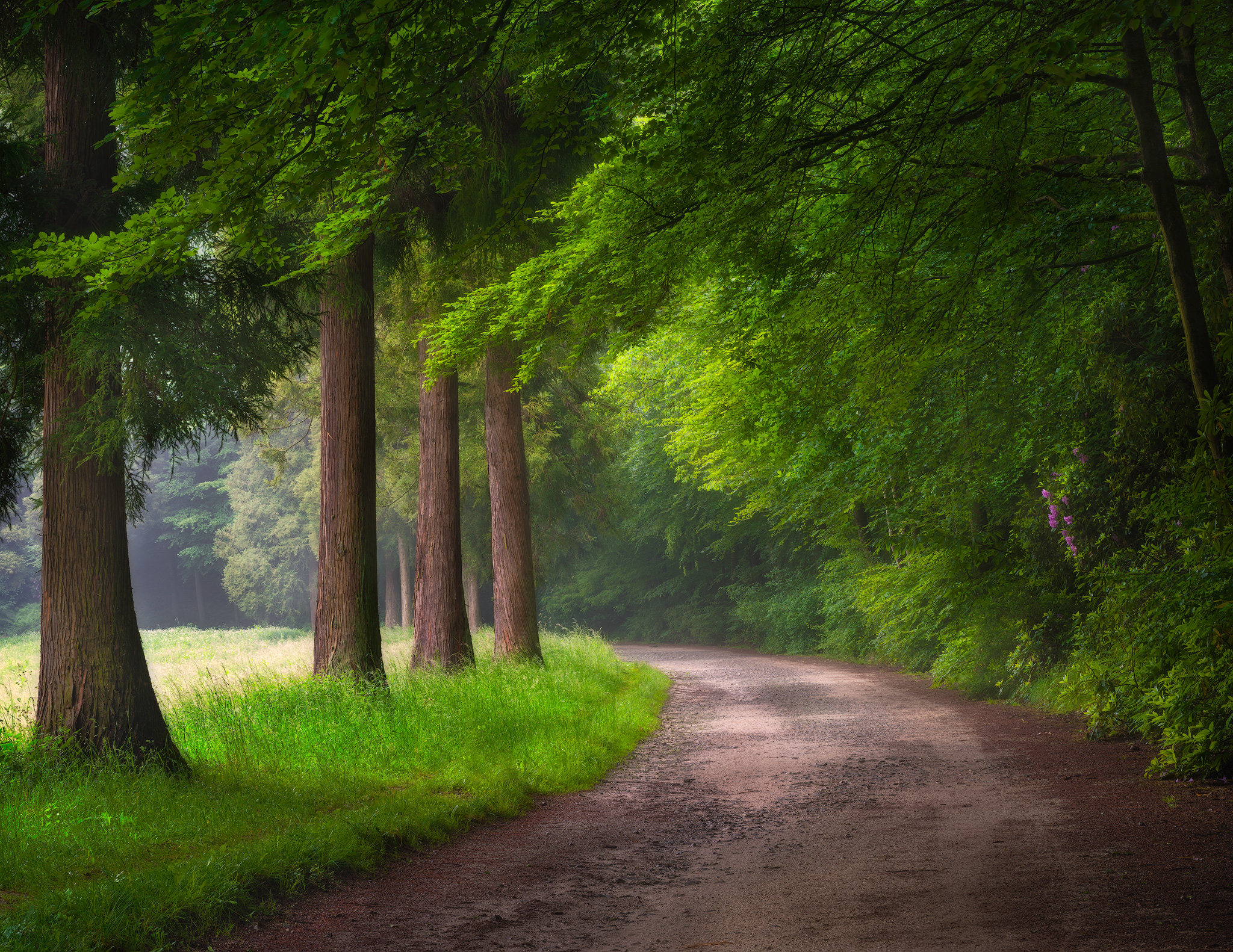 forest-path-copy